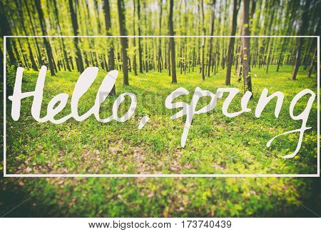 Beautiful greeting card with words: Hello spring