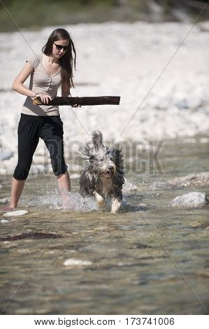 Woman playing with her bearded collie dog in water. She is holding big wooden stick and dog is ready to catch it.