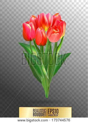 Vector illustration of realistic red tulips bouquet. A bouquet of flowers, lit by the sun. Red tulip on transparent background.