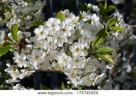 spring Bush flowers flowerbed greens snowdrop forest
