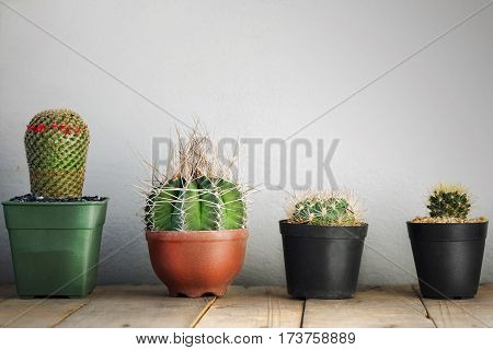 Small cactus in a pot on the wooden floor on a gray wallsOrnamental plants is popular in the area is limited.