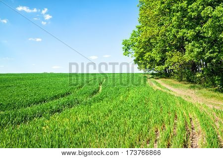 Country road in a field near the green tree day