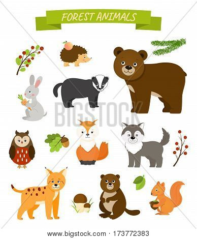 Collection  of forest animals. Isilated on white background.Vector illustration