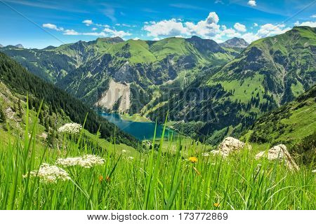 Beautiful fresh grassy meadow and and view down to a mountain lake and wooded mountains in the background. Vilsalpsee, Tannheimer Tal, Tirol.