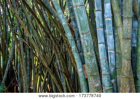 Close-up of giant bamboo covered with carved text. Example of vandalism act