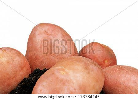 Heap of large raw potatoes on a white background