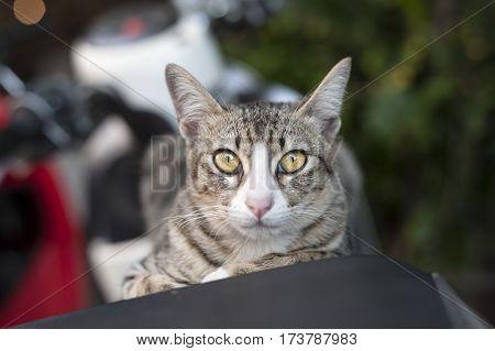 cat gaze fierce eyes on the motorcycle