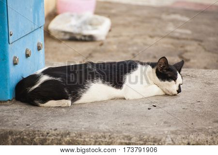 Black and white cat on the stree