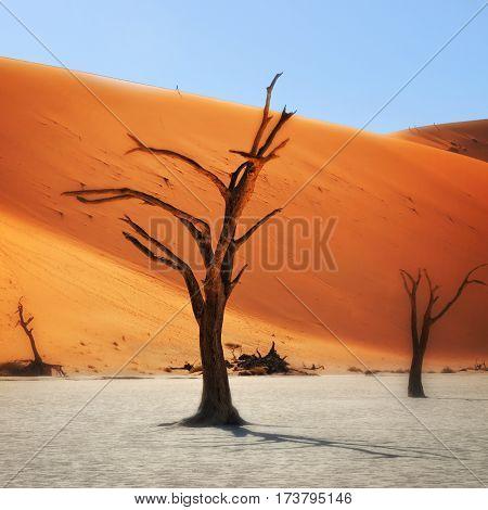 Deadvlei, Sossusvlei. Namibia, Africa
