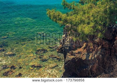 The Rocky Coast With Pine Tree Overlooking The Turquoise Blue Sea In Warm Summer Day