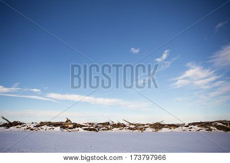One row of trees cut down and piled along edge of snow covered field in a rural winter landscape