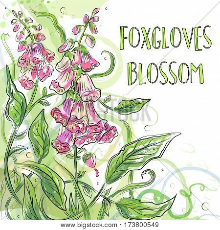 Vector floral blossom beautiful nature garden digitalis purple foxglove watercolor flower pattern background with blooming plants hand drawn in fresh color isolated white background. Postcard design