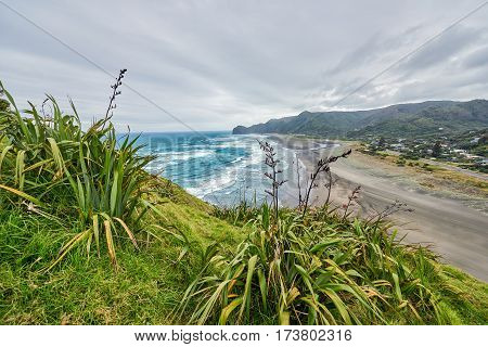 View of Piha beach in New Zealand from the slopes of Lion's rock