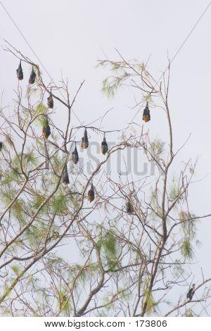 Bats' Tree