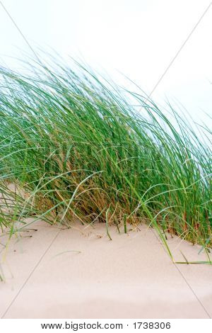 Sea Grass Growing On Sand