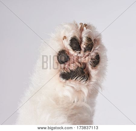 Bottom Of White Dog Paw