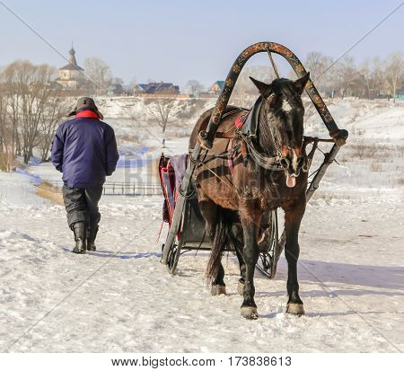 Old horse harnessed to the sled in snow with a sunny day