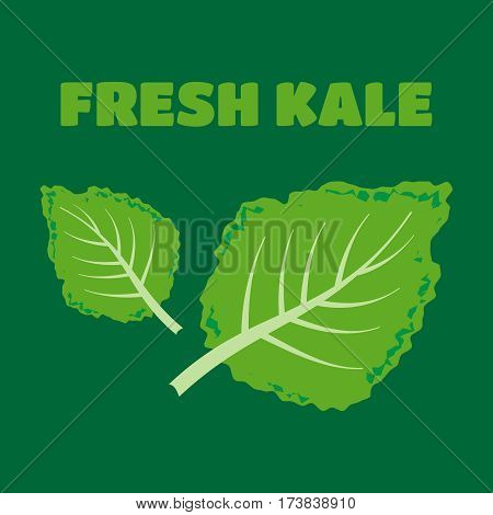 Fresh kale vector illustration. Fresh kale vector