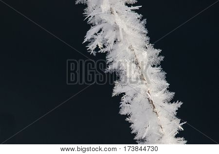 Icy Frost Crystals Clinging to the Frozen Winter Foliage