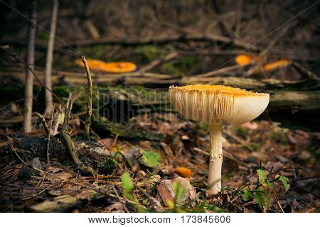 Low angle shot of mushrooms growing on the forest floor