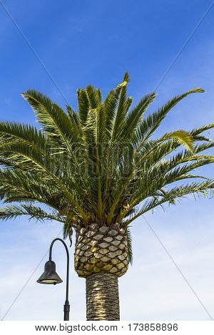 Palm tree with lamp post on bright sunny day