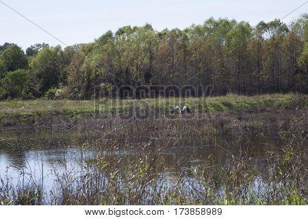 Heron Flying Over Marshland