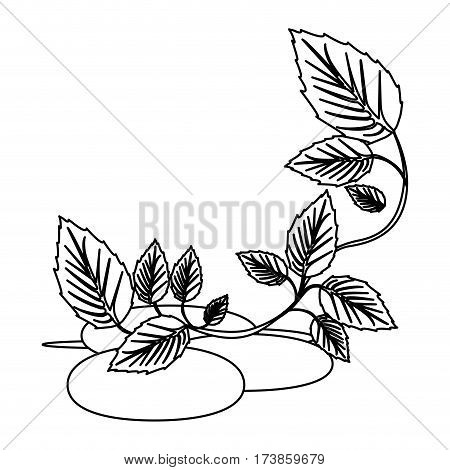 figure spa volcanic rocks with branches and leaves, vector illustraction design