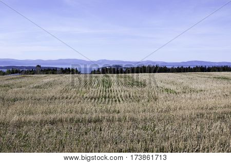 Wide view of concentric rows in a cut corn field off the Trans Canada Highway north of Quebec City, Quebec with the mountains along the shore of Baie Saint Paul in the background, on a beautiful bright sunny blue sky day in September.