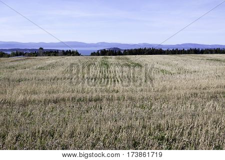 Wide view of concentric rows in a cut corn field off the Trans Canada Highway north of Quebec City, Quebec with the mountains along the shore of Baie Saint Paul in the background on a beautiful bright sunny blue sky day in September.