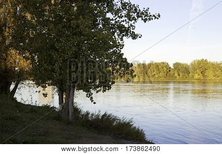 Wide view of a small lake behind a large green tree and foliage on the edge of the shore in Woodland Park in Lasalle, Quebec on a bright sunny day in October.