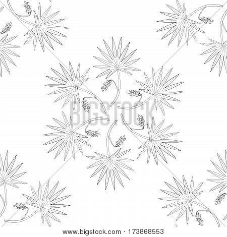 Saw Palmetto (Serenoa repens). Hand drawn botanical illustration. Medicinal tree. Mandala seamless pattern.