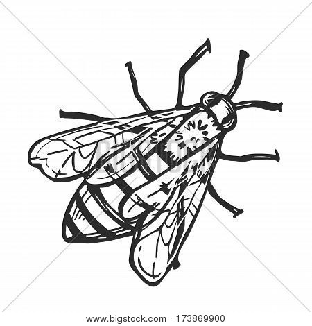 Honey bee freehand pencil drawing isolated on white background vector illustration. Bumble bee monochrome sketch, flying insect design element. Honey bee icon in vintage style. Honey bee vector. Sketch of honey bee.