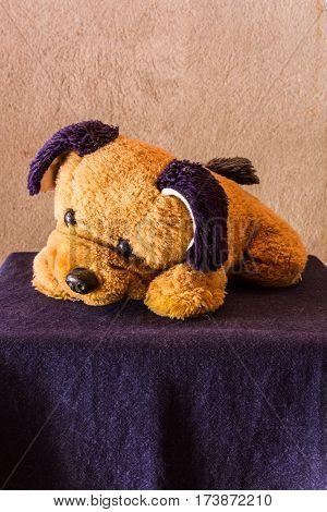 Still life Cute dog brown doll , art