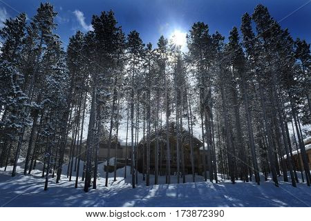 Cabin in the forest woods pine trees winter time covered in snow