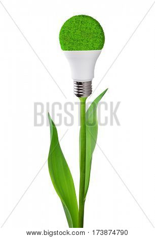 Eco LED light bulb on stem of plant isolated on white background. Concept of green energy.