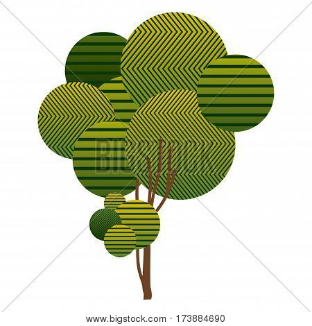 colorful sketch high leafy tree plant with striped lines and thin trunk vector illustration