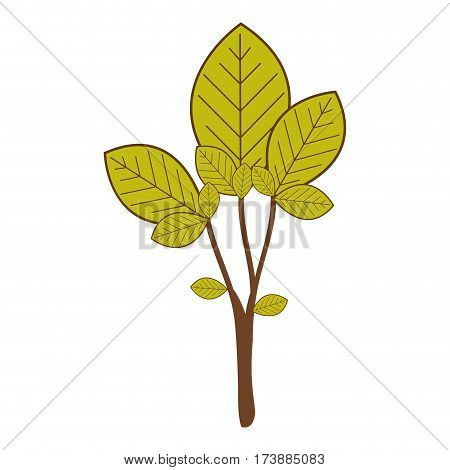 large ramifications with green leaves vector illustration