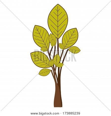 ramifications with green leaves plant icon vector illustration