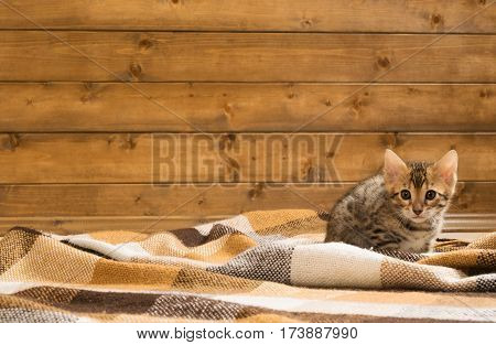 Auburn spotted kitten sitting on the floor in a blanket