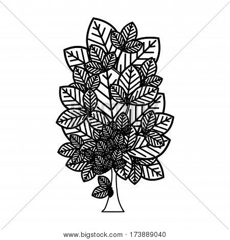 sketch silhouette leafy tree plant with several leaves vector illustration