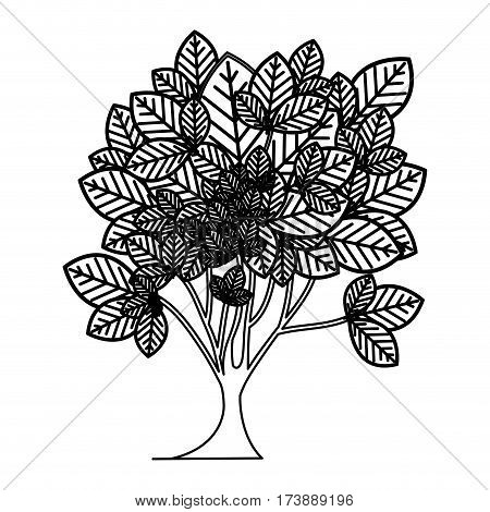sketch silhouette leafy tree plant with ramifications vector illustration