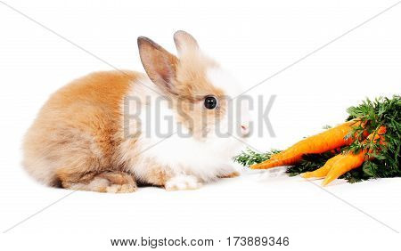 cute small rabbit with carrots against white background