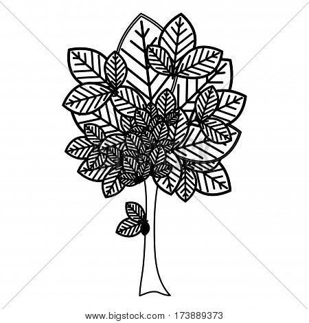 sketch silhouette leafy tree plant with large trunk vector illustration