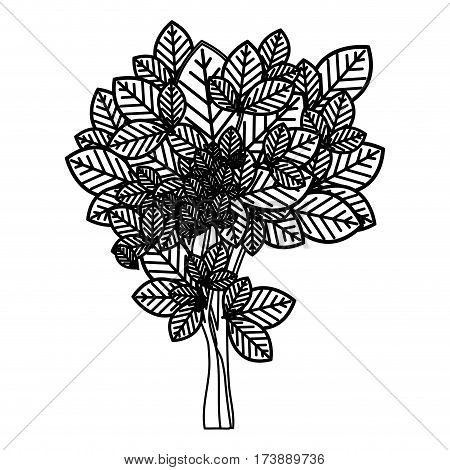 sketch silhouette leafy tree with ramifications nature icon vector illustration