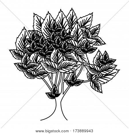 sketch silhouette leafy tree with several leaves vector illustration