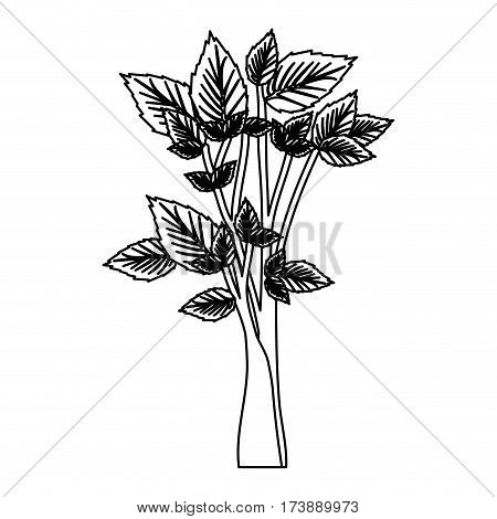 sketch silhouette leafy tree forest icon vector illustration