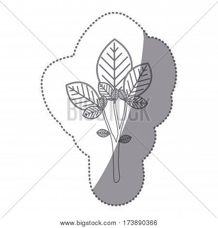 sticker gray color large ramifications with oval leaves vector illustration