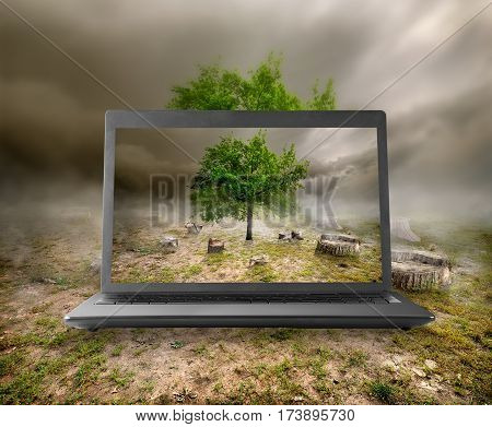 Tree and stumps on the monitor of a notebook