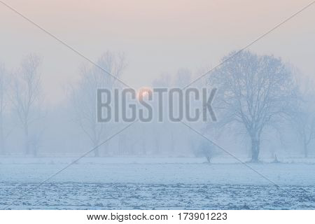 Image of a landscape with trees field and snow with fog at sunset in winter in Germany Bavaria