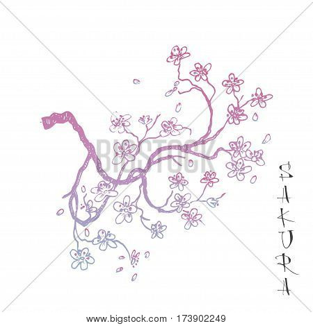 Sakura japanese cherry branch with blooming flowers vector illustration. Blossoming tree with falling petals hand drawn sketch. Far eastern style lettering.